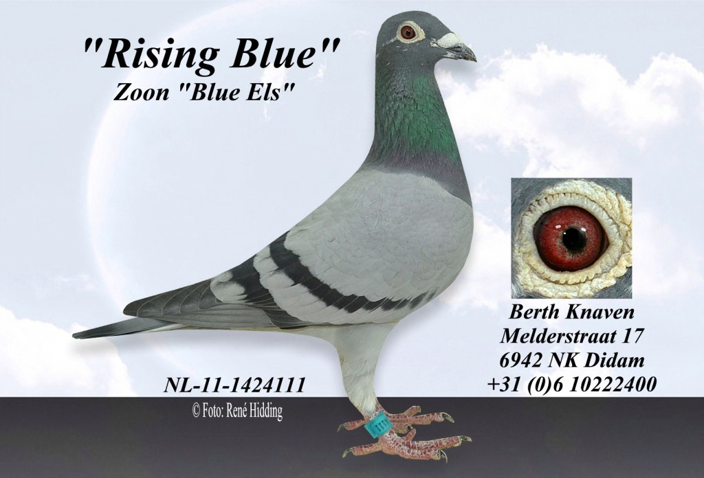 NL-11-1424111 rising Blue