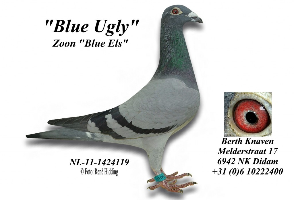 NL-11-1424119 wit Blue ugly